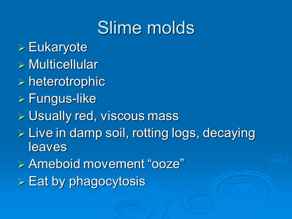 Slime molds  Eukaryote  Multicellular  heterotrophic  Fungus-like  Usually red, viscous mass  Live in damp soil, rotting logs, decaying leaves 