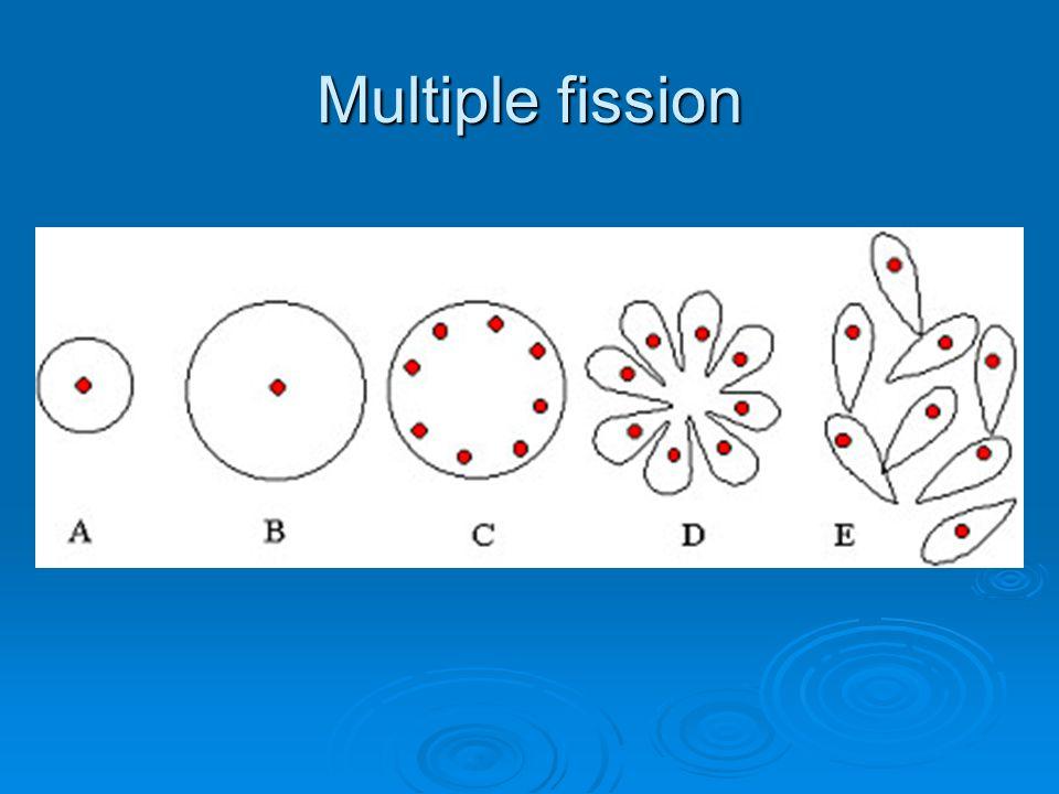 Multiple fission