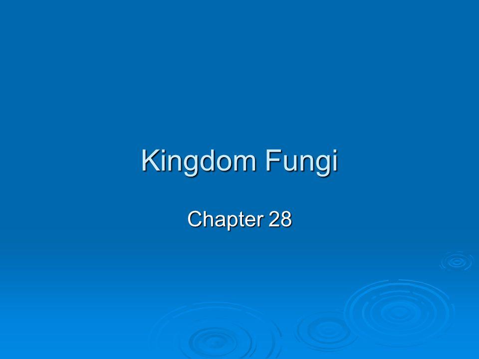 Kingdom Fungi Chapter 28