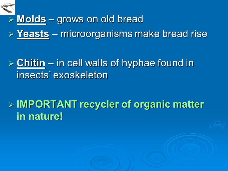  Molds – grows on old bread  Yeasts – microorganisms make bread rise  Chitin – in cell walls of hyphae found in insects' exoskeleton  IMPORTANT re