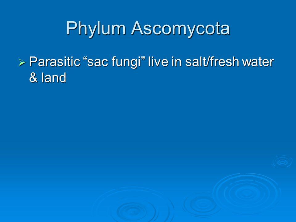 "Phylum Ascomycota  Parasitic ""sac fungi"" live in salt/fresh water & land"