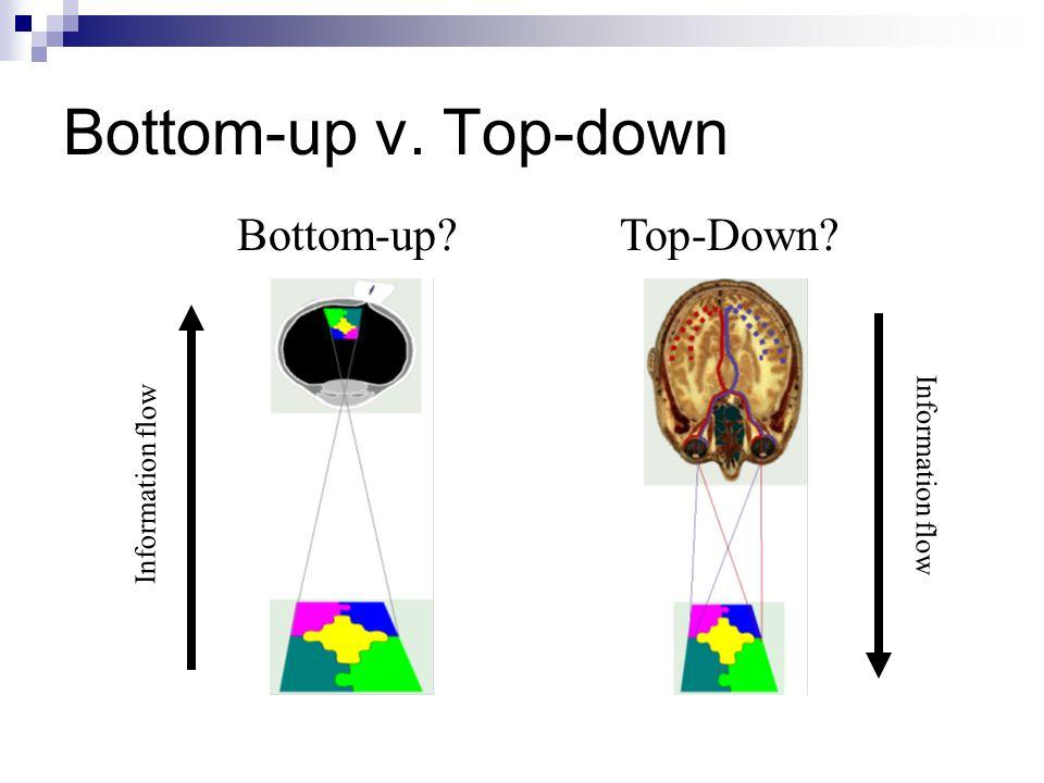 Bottom-up v. Top-down Top-Down?Bottom-up? Information flow