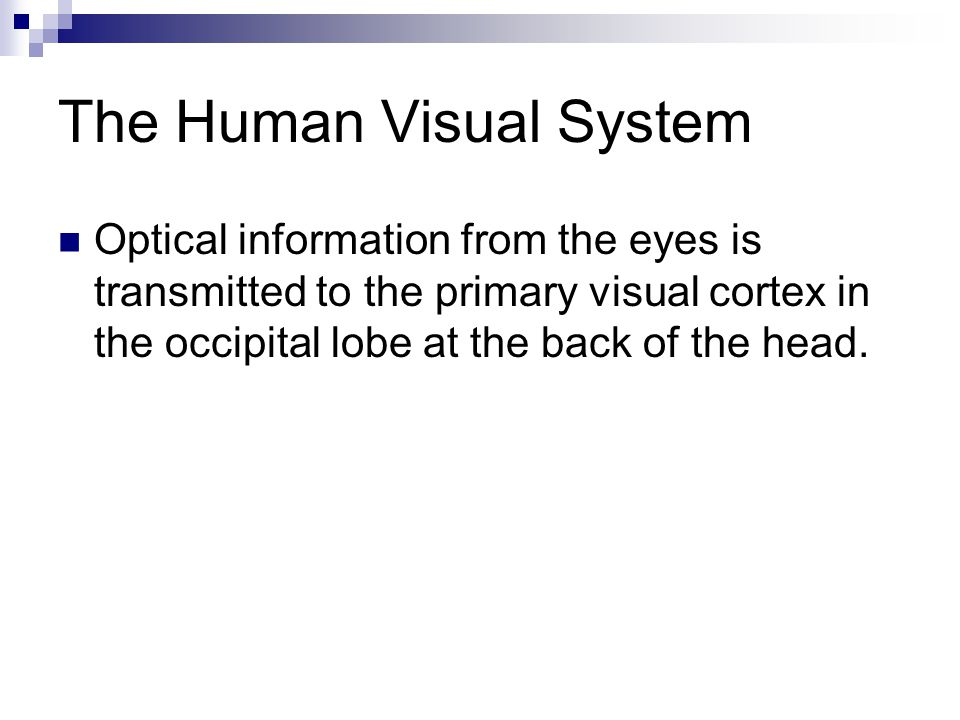 The Human Visual System Optical information from the eyes is transmitted to the primary visual cortex in the occipital lobe at the back of the head.