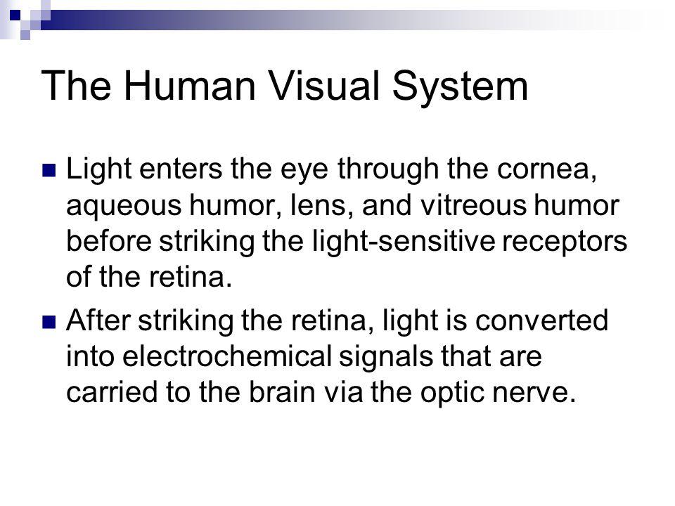 The Human Visual System Light enters the eye through the cornea, aqueous humor, lens, and vitreous humor before striking the light-sensitive receptors of the retina.