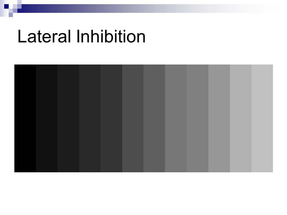 Lateral Inhibition