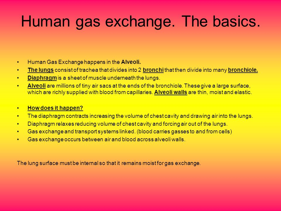 Gas exchange happens by diffusion of gasses across the thin walls of the alveoli.