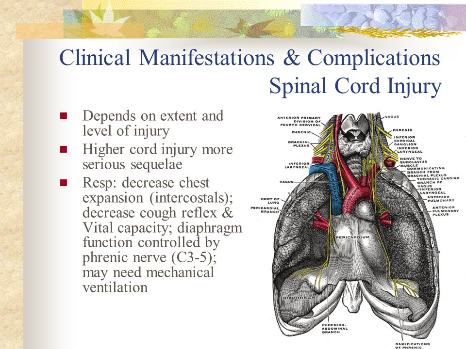 Clinical Manifestations & Complications Spinal Cord Injury Depends on extent and level of injury Higher cord injury more serious sequelae Resp: decrea