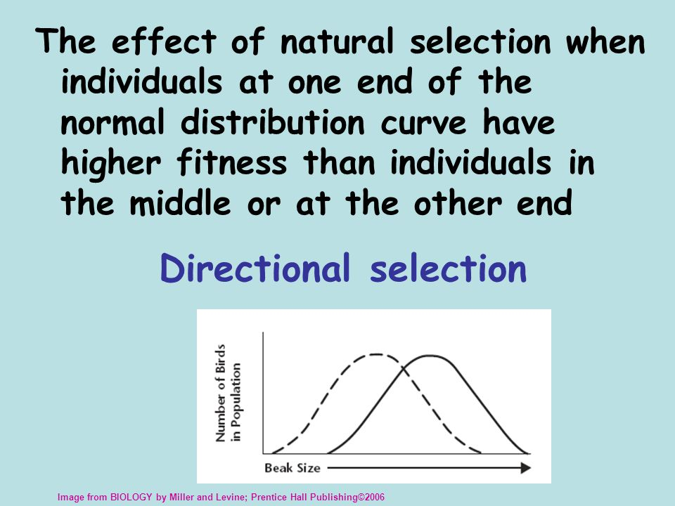 The effect of natural selection when individuals at the extreme ends of the normal distribution curve have higher fitness than those near the center of the curve Disruptive selection Image from BIOLOGY by Miller and Levine; Prentice Hall Publishing©2006