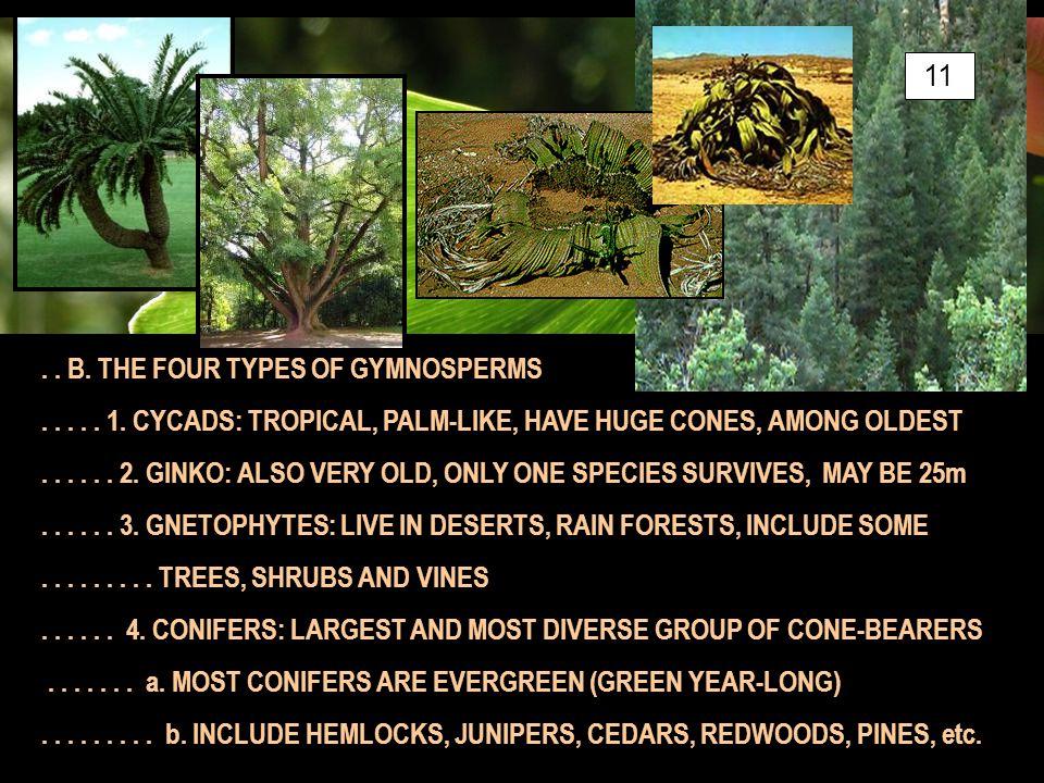.. B. THE FOUR TYPES OF GYMNOSPERMS..... 1.