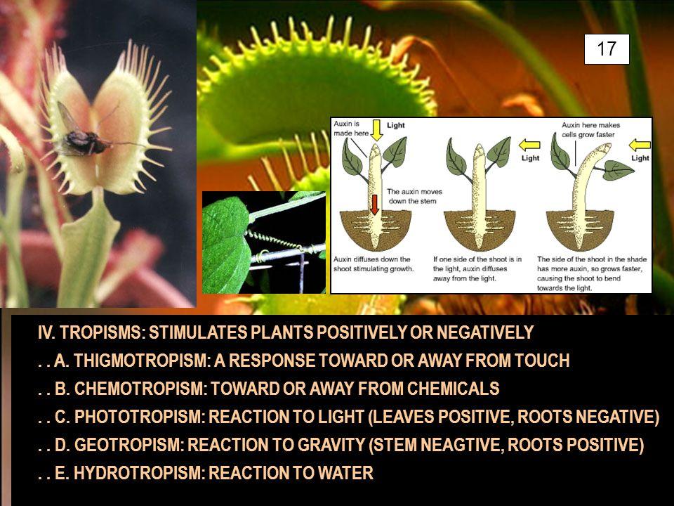 IV. TROPISMS: STIMULATES PLANTS POSITIVELY OR NEGATIVELY..