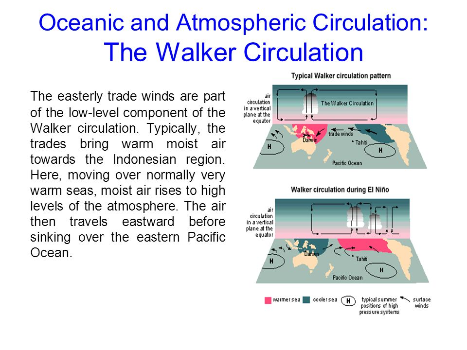 Oceanic and Atmospheric Circulation: The Walker Circulation The easterly trade winds are part of the low-level component of the Walker circulation. Ty