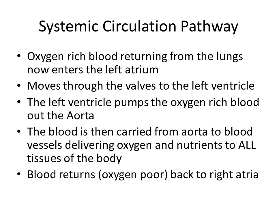 Systemic Circulation Pathway Oxygen rich blood returning from the lungs now enters the left atrium Moves through the valves to the left ventricle The
