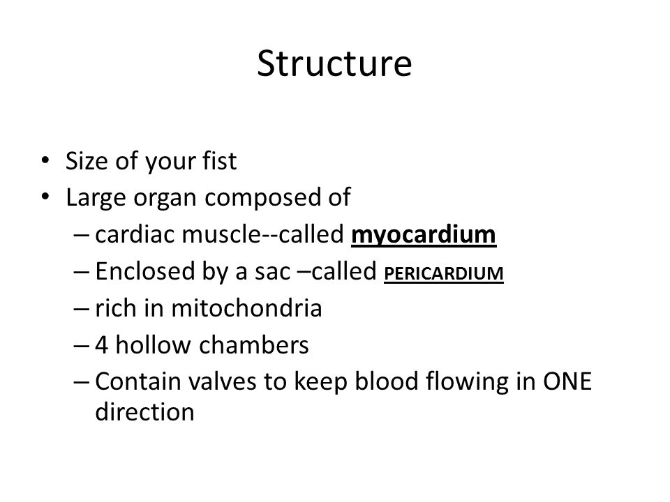 Structure Size of your fist Large organ composed of – cardiac muscle--called myocardium – Enclosed by a sac –called PERICARDIUM – rich in mitochondria