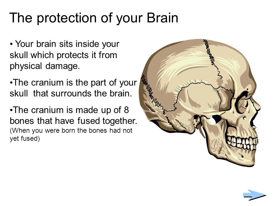 The protection of your Brain Your brain sits inside your skull which protects it from physical damage. The cranium is the part of your skull that surr