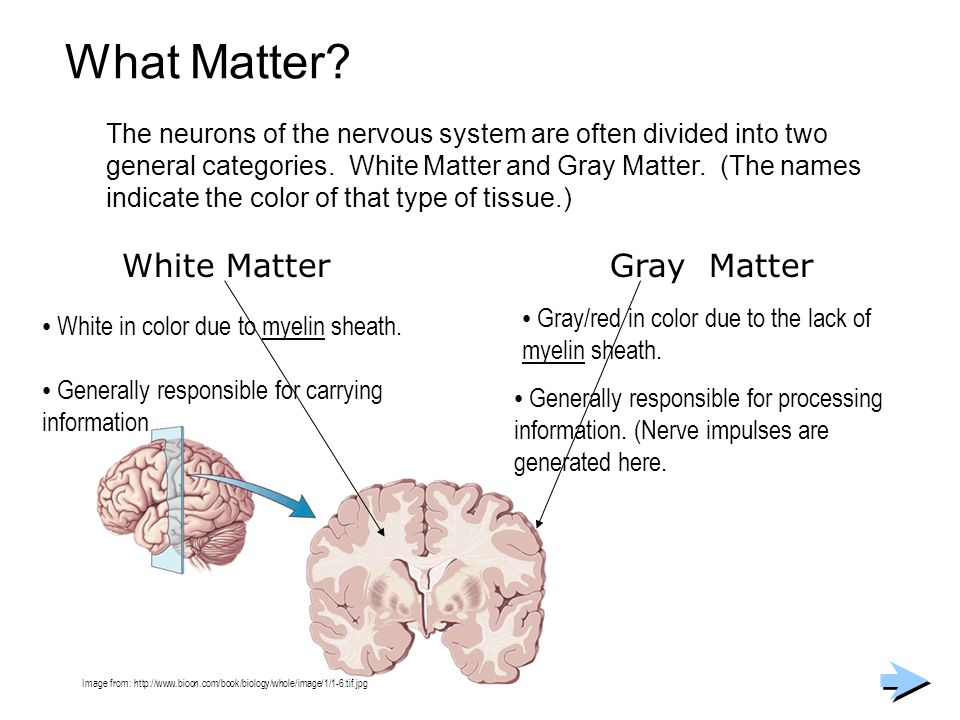 What Matter? The neurons of the nervous system are often divided into two general categories. White Matter and Gray Matter. (The names indicate the co