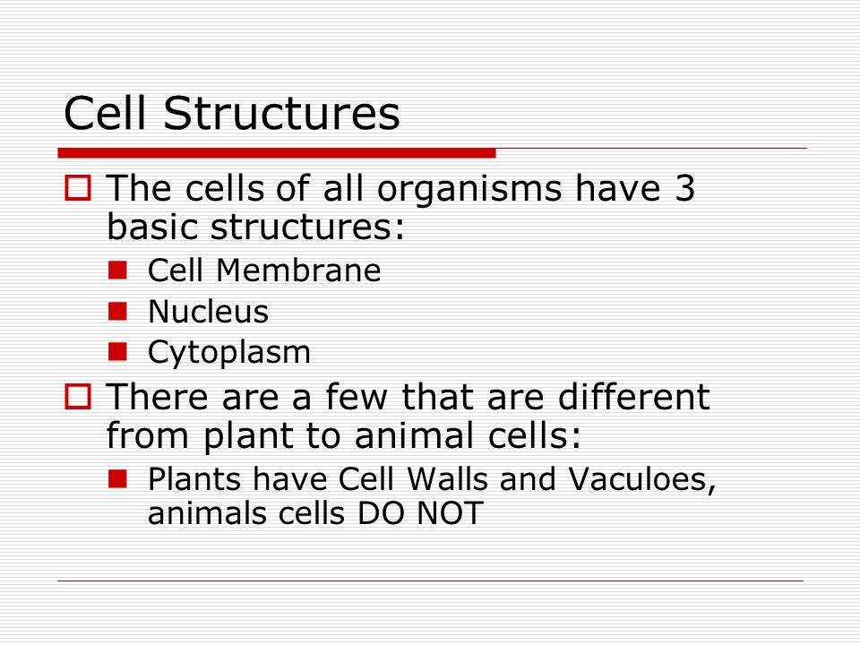 Cell Structures  The cells of all organisms have 3 basic structures: Cell Membrane Nucleus Cytoplasm  There are a few that are different from plant to animal cells: Plants have Cell Walls and Vaculoes, animals cells DO NOT