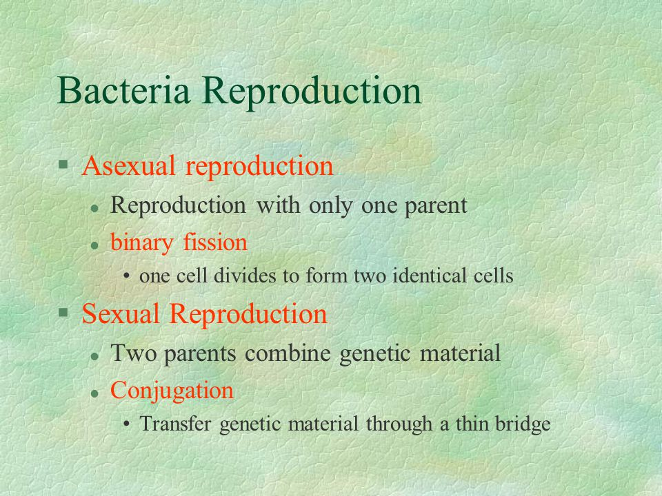 Bacteria Reproduction §Asexual reproduction l Reproduction with only one parent l binary fission one cell divides to form two identical cells §Sexual