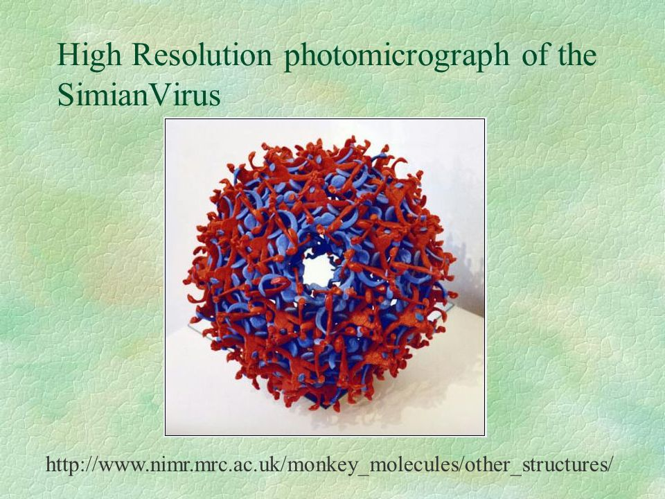 High Resolution photomicrograph of the SimianVirus http://www.nimr.mrc.ac.uk/monkey_molecules/other_structures/