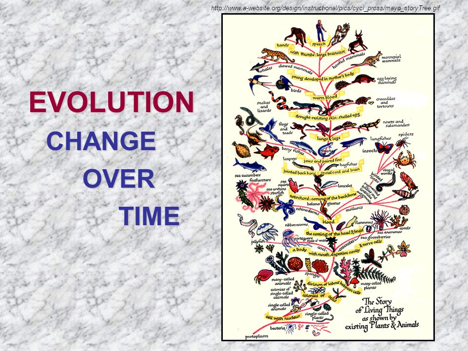 EVOLUTIONCHANGE OVER OVER TIME TIME http://www.a-website.org/design/instructional/pics/cycl_prcss/mayo_storyTree.gif