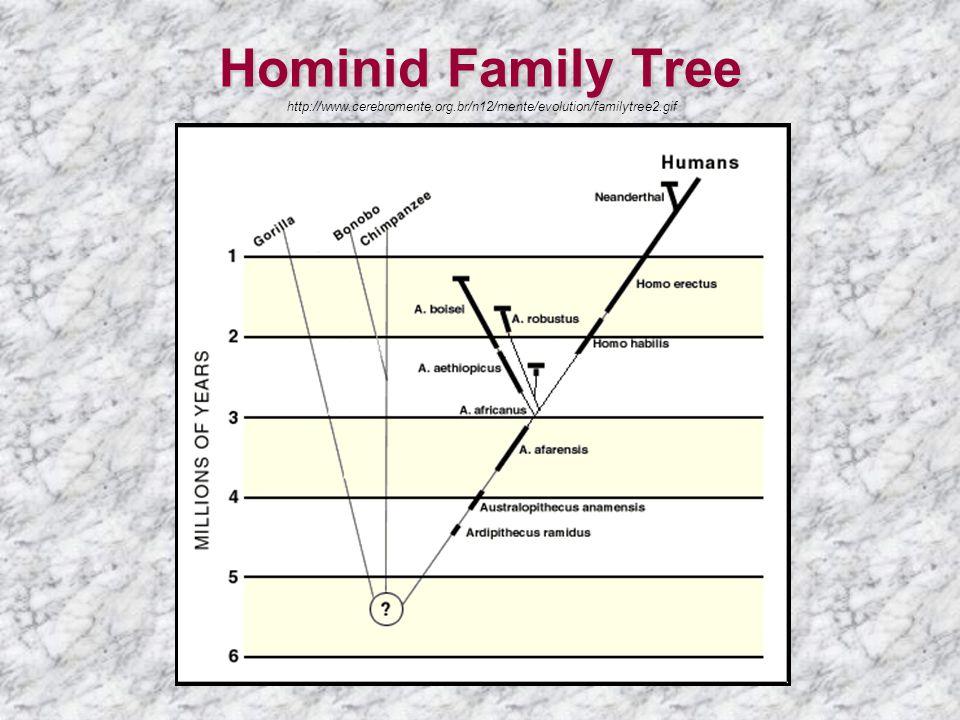 Hominid Family Tree Hominid Family Tree http://www.cerebromente.org.br/n12/mente/evolution/familytree2.gif