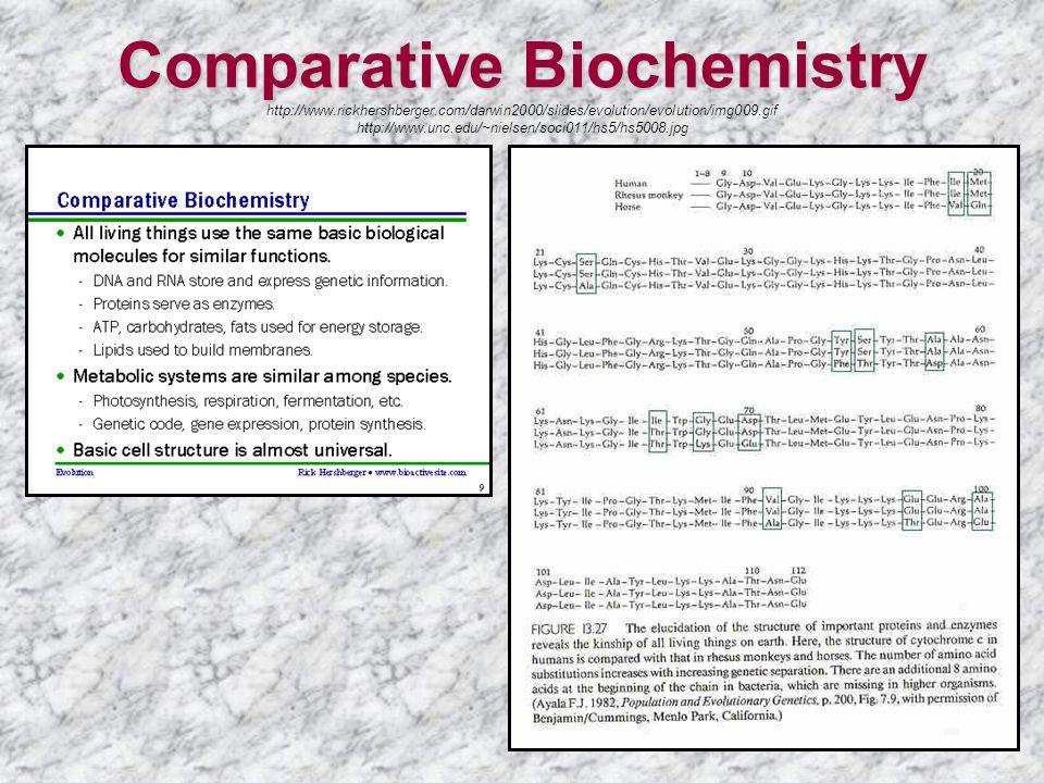 Comparative Biochemistry Comparative Biochemistry http://www.rickhershberger.com/darwin2000/slides/evolution/evolution/img009.gif http://www.unc.edu/~