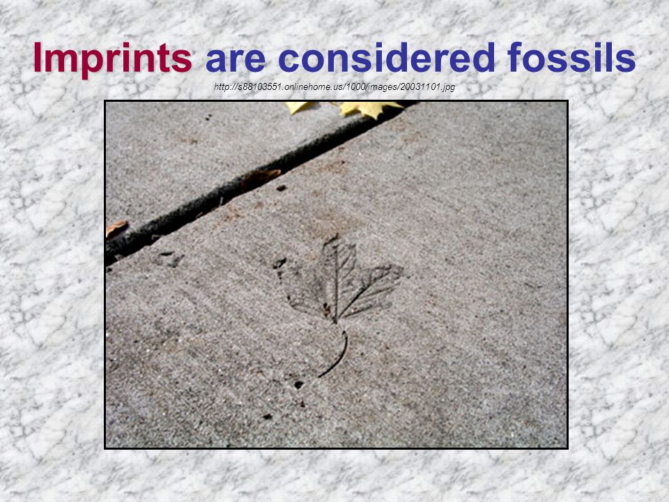 Imprints Imprints are considered fossils http://s88103551.onlinehome.us/1000/images/20031101.jpg