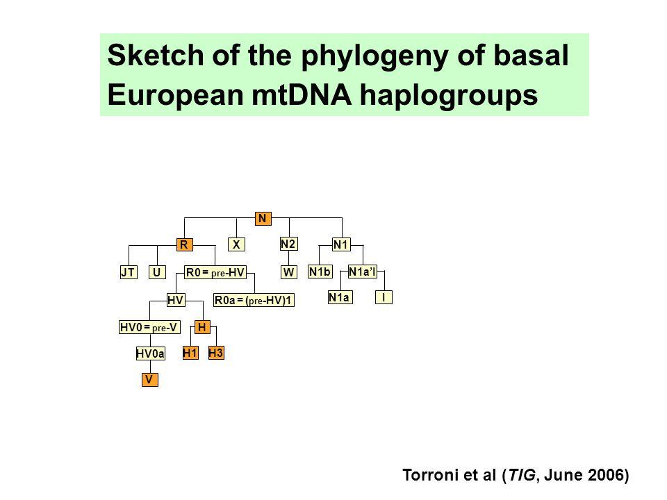 HV HV0 = pre -V HV0a H3 H1 H V R0a = ( pre -HV)1 R0 = pre -HV U JT R X N2 W N1bN1a'I N1 N1a I N Sketch of the phylogeny of basal European mtDNA haplogroups Torroni et al (TIG, June 2006)