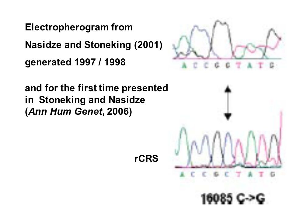 rCRS Electropherogram from Nasidze and Stoneking (2001) generated 1997 / 1998 and for the first time presented in Stoneking and Nasidze (Ann Hum Genet, 2006)