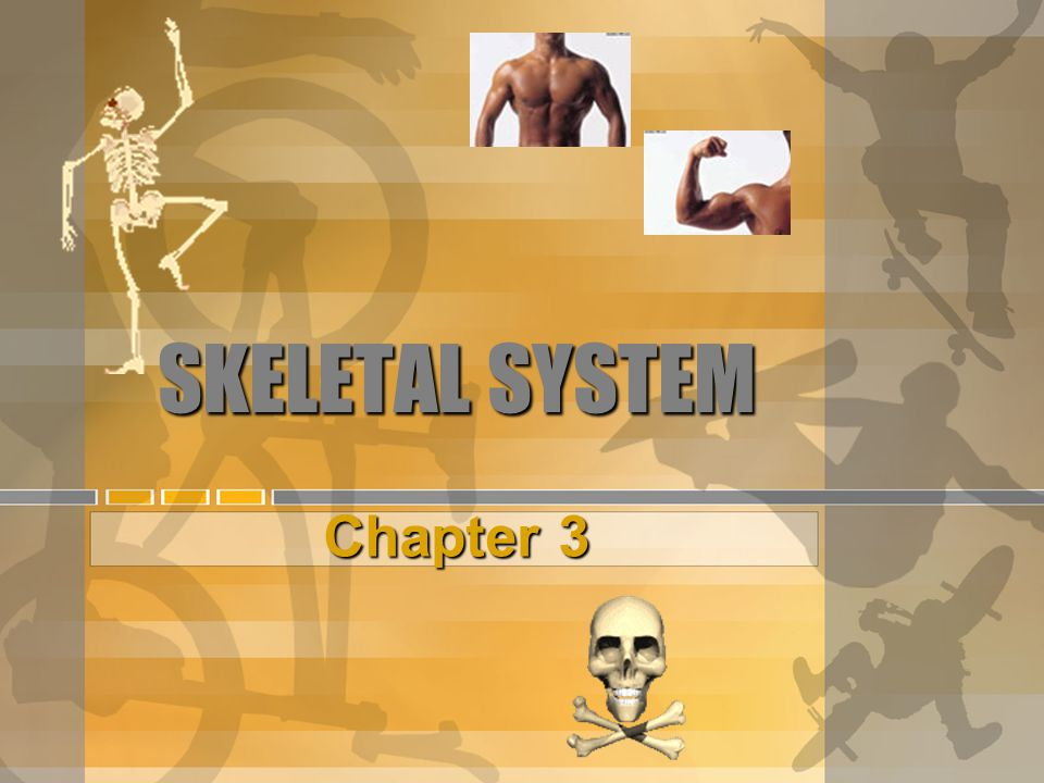 BONES OF THE UPPER BODY  Turn to p.