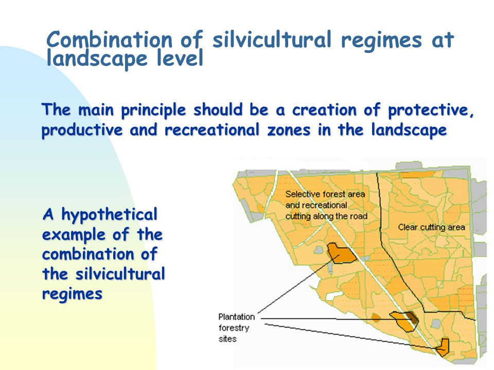 Combination of silvicultural regimes at landscape level The main principle should be a creation of protective, productive and recreational zones in the landscape A hypothetical example of the combination of the silvicultural regimes