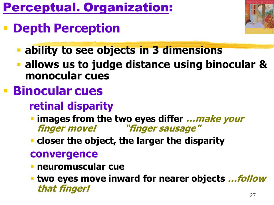 27 Perceptual. Organization:  Depth Perception  ability to see objects in 3 dimensions  allows us to judge distance using binocular & monocular cue