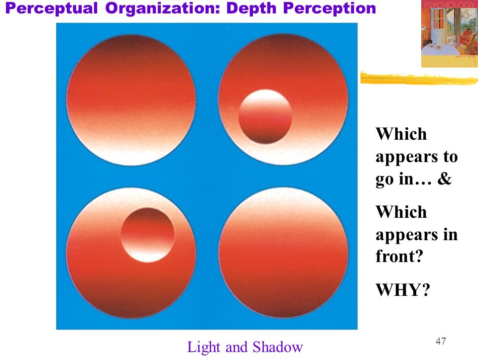 47 Perceptual Organization: Depth Perception Light and Shadow Which appears to go in… & Which appears in front.