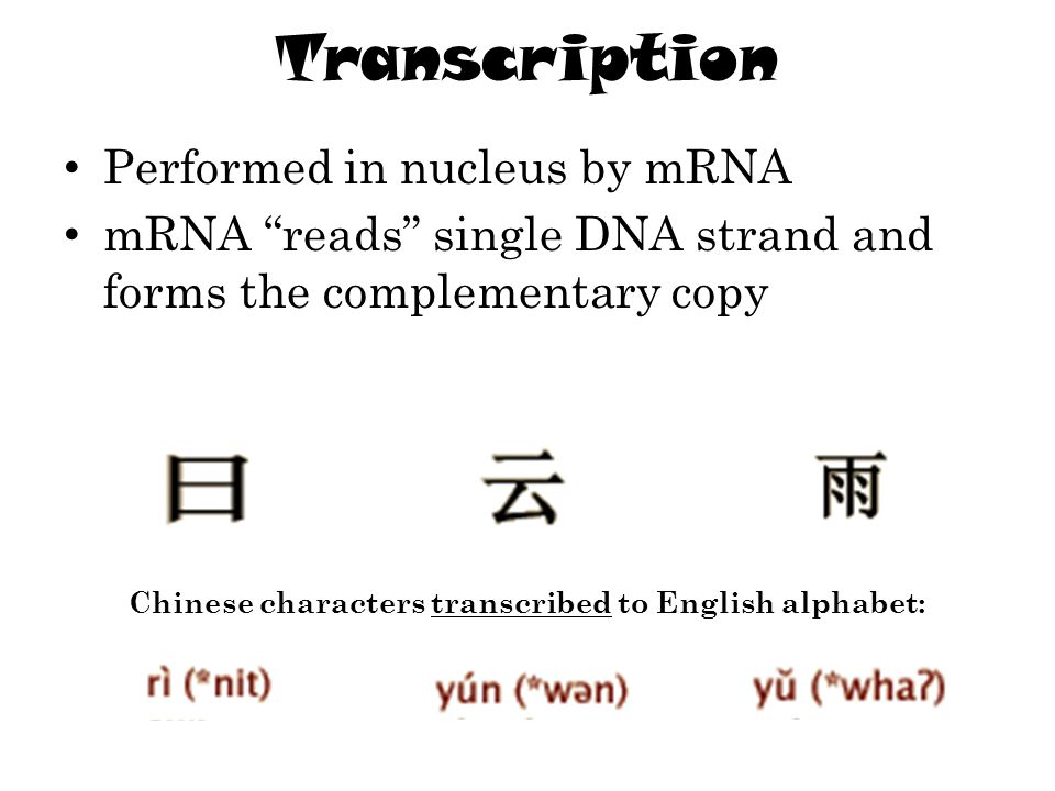 "Transcription Performed in nucleus by mRNA mRNA ""reads"" single DNA strand and forms the complementary copy Chinese characters transcribed to English a"