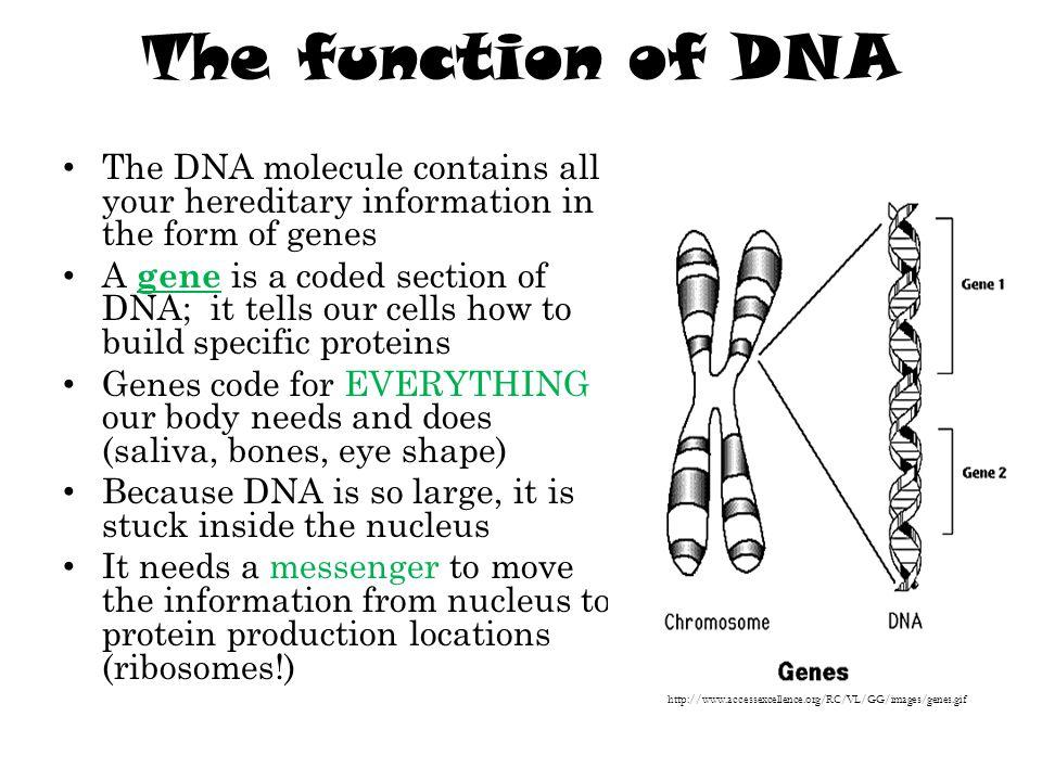 DNA needs RNA.