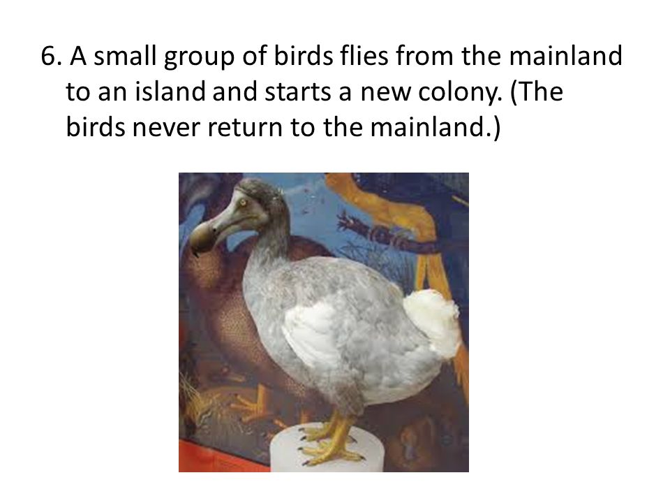 6. A small group of birds flies from the mainland to an island and starts a new colony.