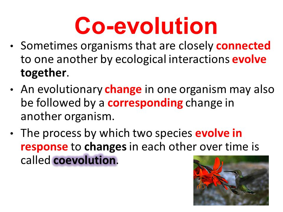 Co-evolution