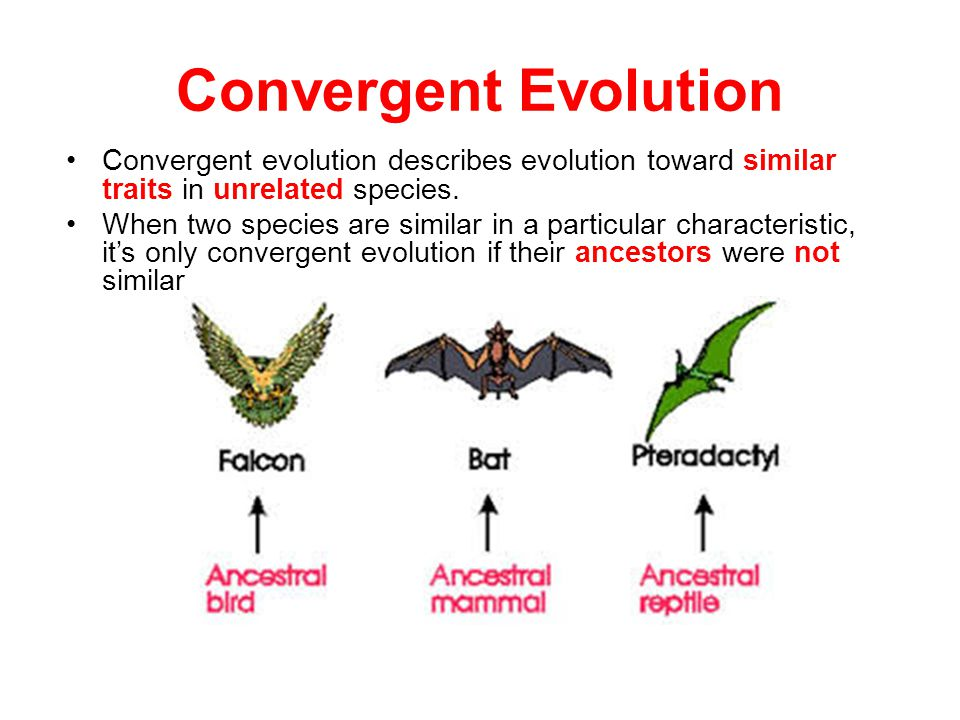 Convergent evolution describes evolution toward similar traits in unrelated species. When two species are similar in a particular characteristic, it's