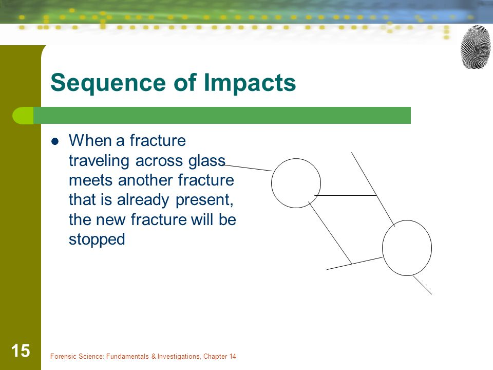 Forensic Science: Fundamentals & Investigations, Chapter 14 15 Sequence of Impacts When a fracture traveling across glass meets another fracture that