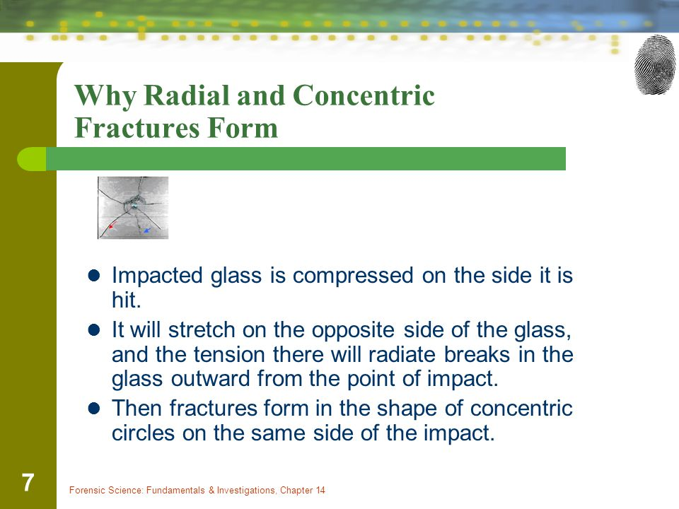 Forensic Science: Fundamentals & Investigations, Chapter 14 8 Radial Fracture Primary Fracture Crack that extends out like spoke of wheel from the point at which glass was struck Show up on surface opposite of where pressure was