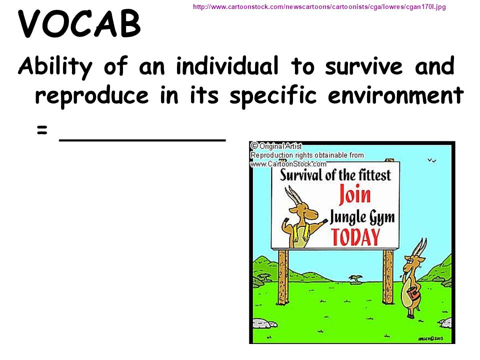 VOCAB Ability of an individual to survive and reproduce in its specific environment = ___________ http://www.cartoonstock.com/newscartoons/cartoonists/cga/lowres/cgan170l.jpg
