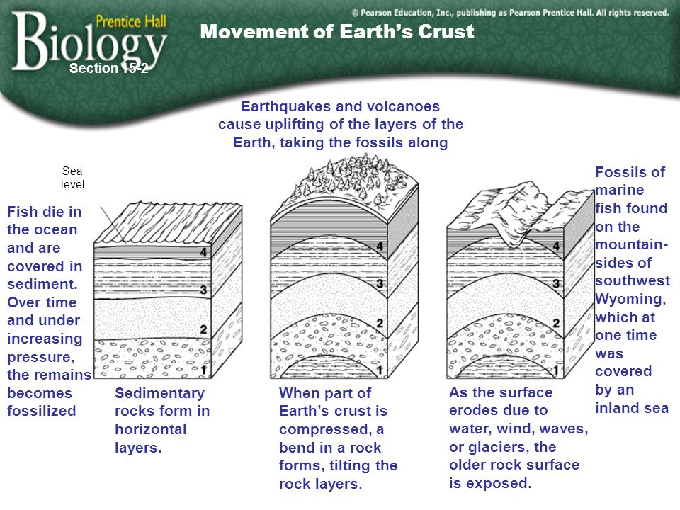 Go to Section: Sea level Sedimentary rocks form in horizontal layers.
