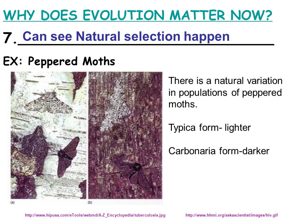 WHY DOES EVOLUTION MATTER NOW. There is a natural variation in populations of peppered moths.