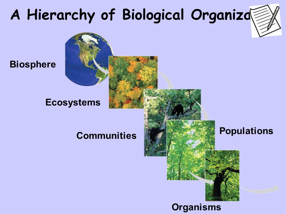 Ecosystems Communities Organisms Populations Biosphere A Hierarchy of Biological Organization