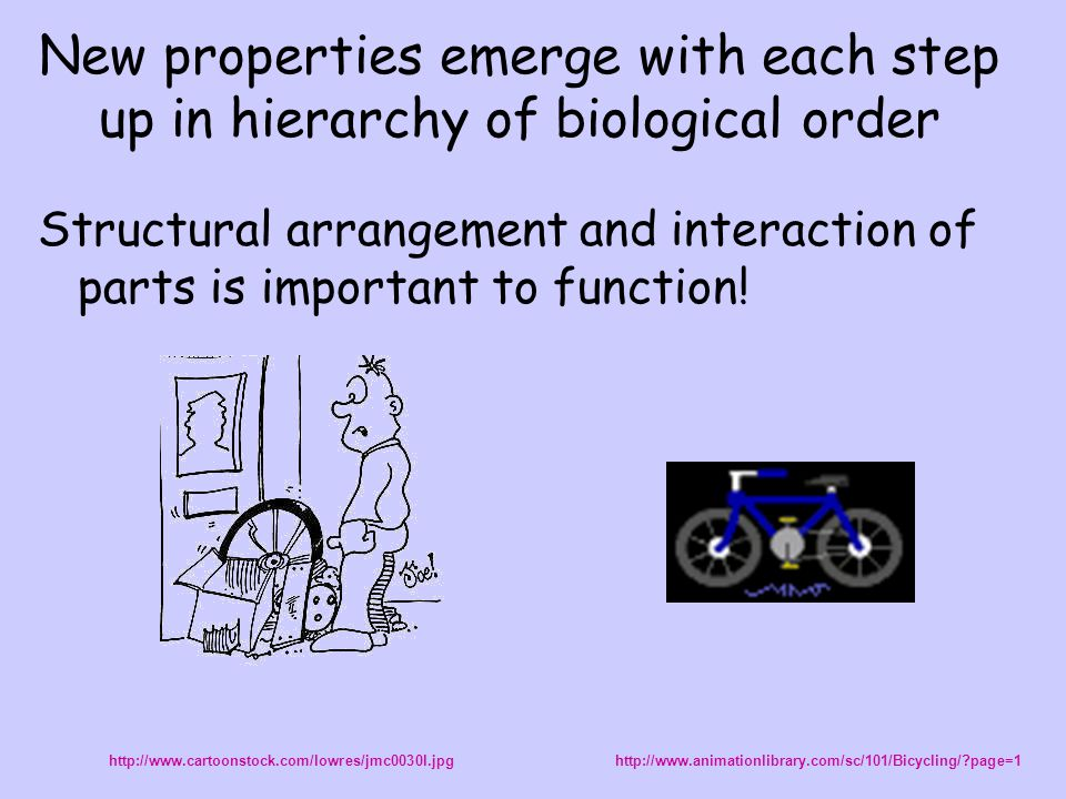 New properties emerge with each step up in hierarchy of biological order Structural arrangement and interaction of parts is important to function! htt