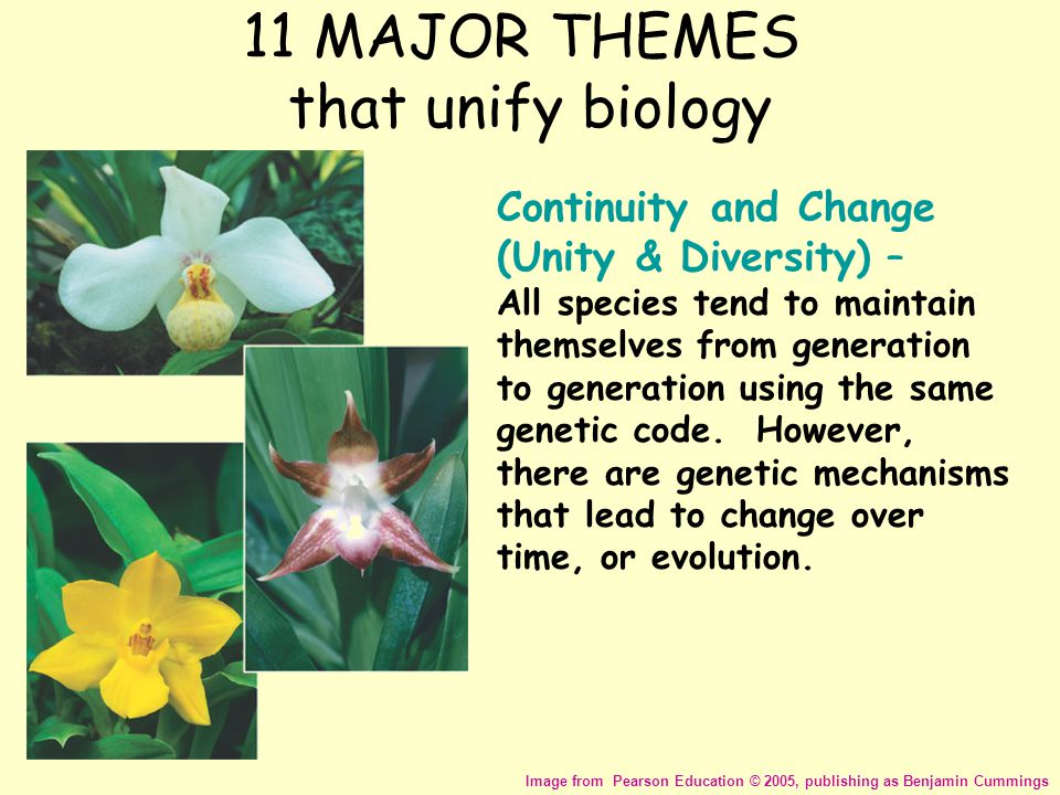 11 MAJOR THEMES that unify biology Image from Pearson Education © 2005, publishing as Benjamin Cummings Continuity and Change (Unity & Diversity) – Al