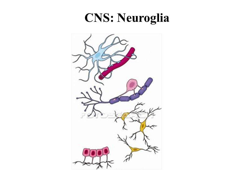 CNS: Neuroglia