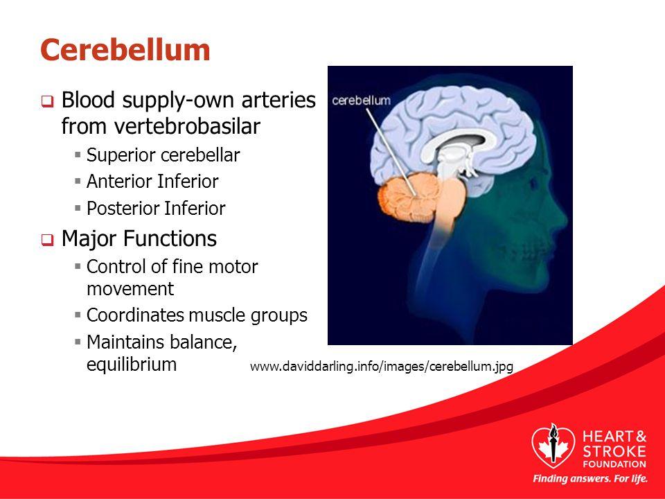 Cerebellum  Blood supply-own arteries from vertebrobasilar  Superior cerebellar  Anterior Inferior  Posterior Inferior  Major Functions  Control