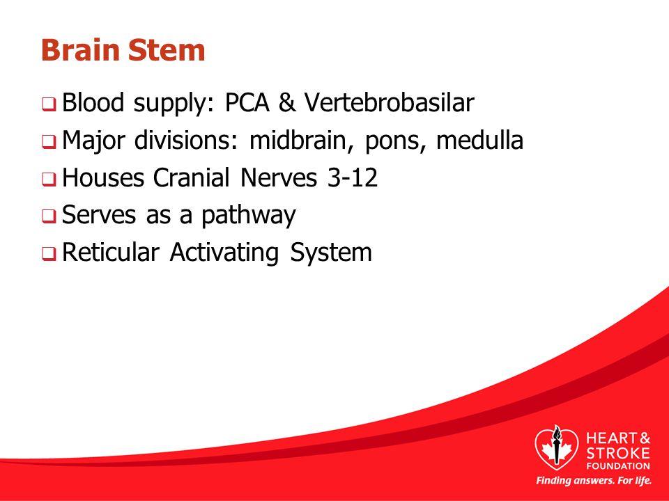 Brain Stem  Blood supply: PCA & Vertebrobasilar  Major divisions: midbrain, pons, medulla  Houses Cranial Nerves 3-12  Serves as a pathway  Retic