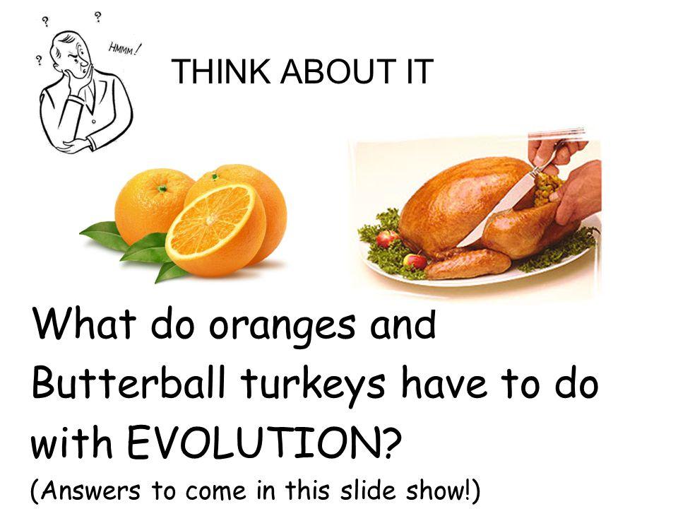 EVIDENCE OF EVOLUTION: 1.________________ 2.________________ 3.