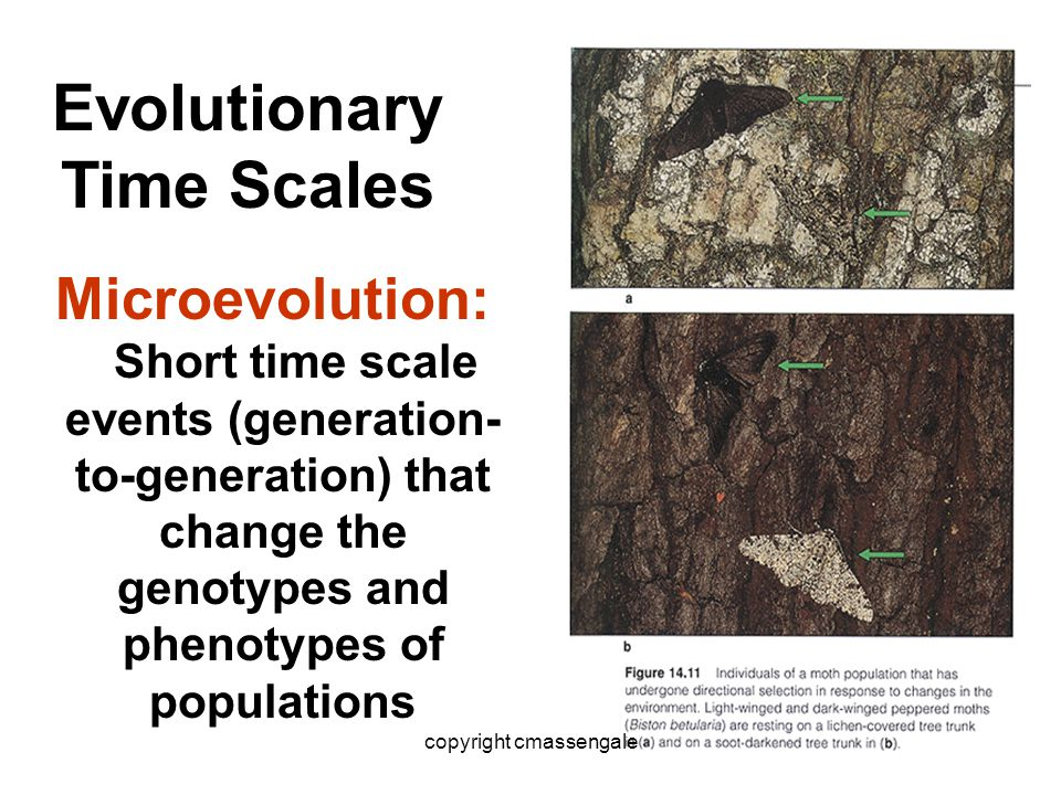 44 Microevolution: Short time scale events (generation- to-generation) that change the genotypes and phenotypes of populations Evolutionary Time Scale
